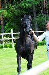 Hevosen hankinta